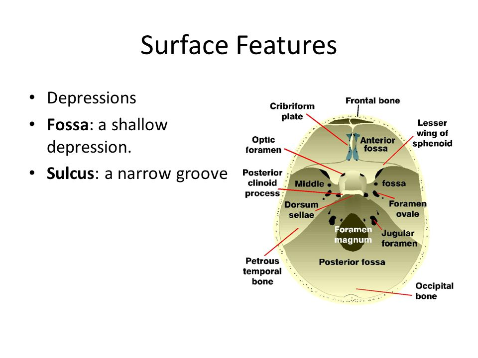 Surface Features Depressions Fossa: a shallow depression.
