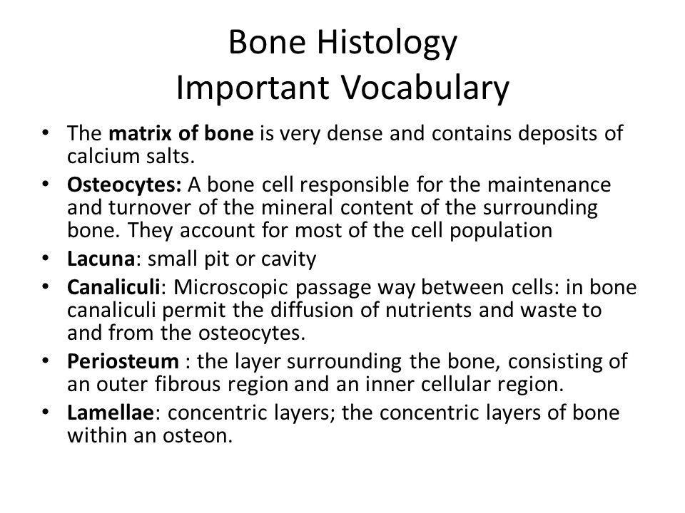 Bone Histology Important Vocabulary