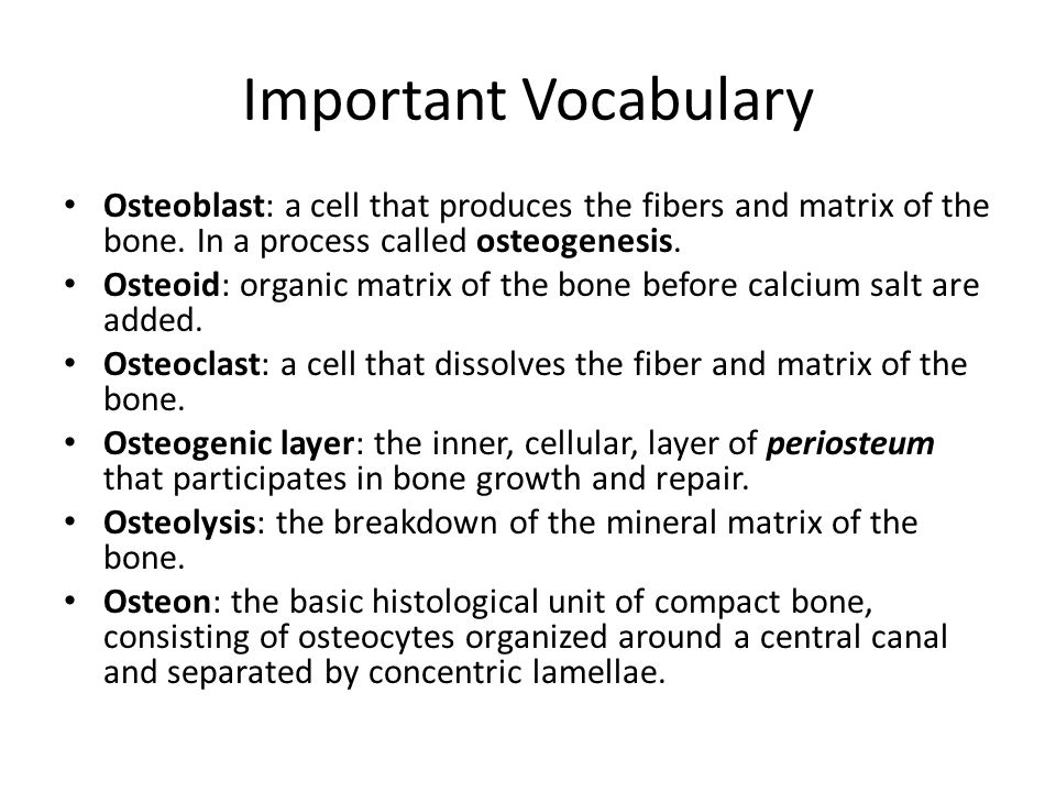 Important Vocabulary Osteoblast: a cell that produces the fibers and matrix of the bone. In a process called osteogenesis.