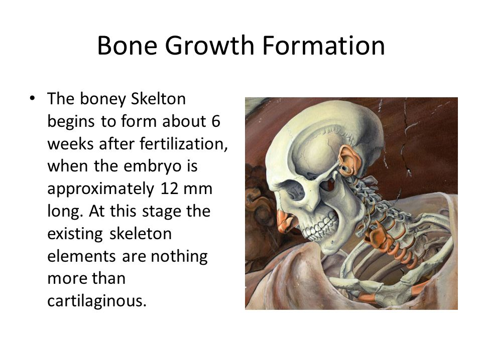 Bone Growth Formation