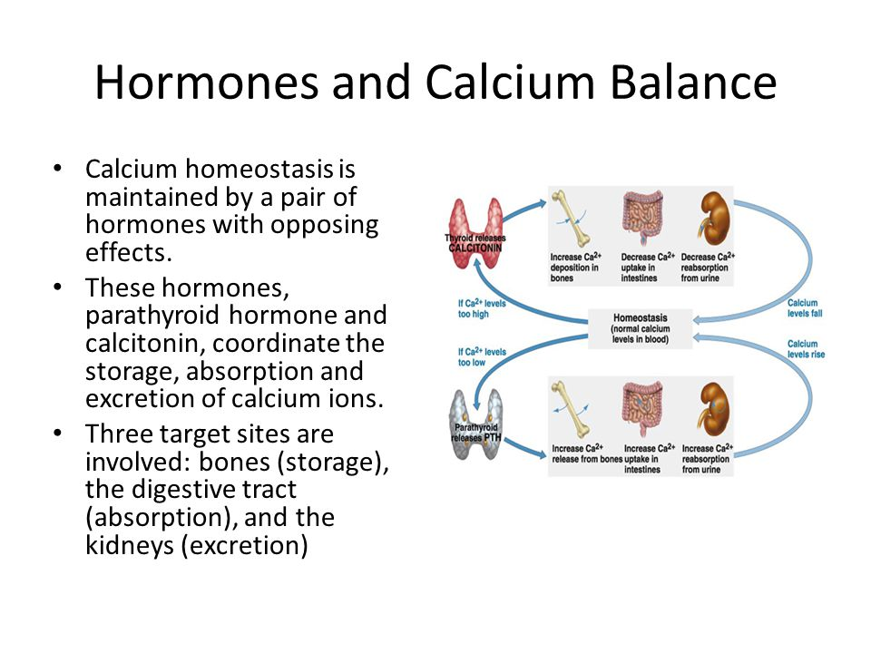 Hormones and Calcium Balance