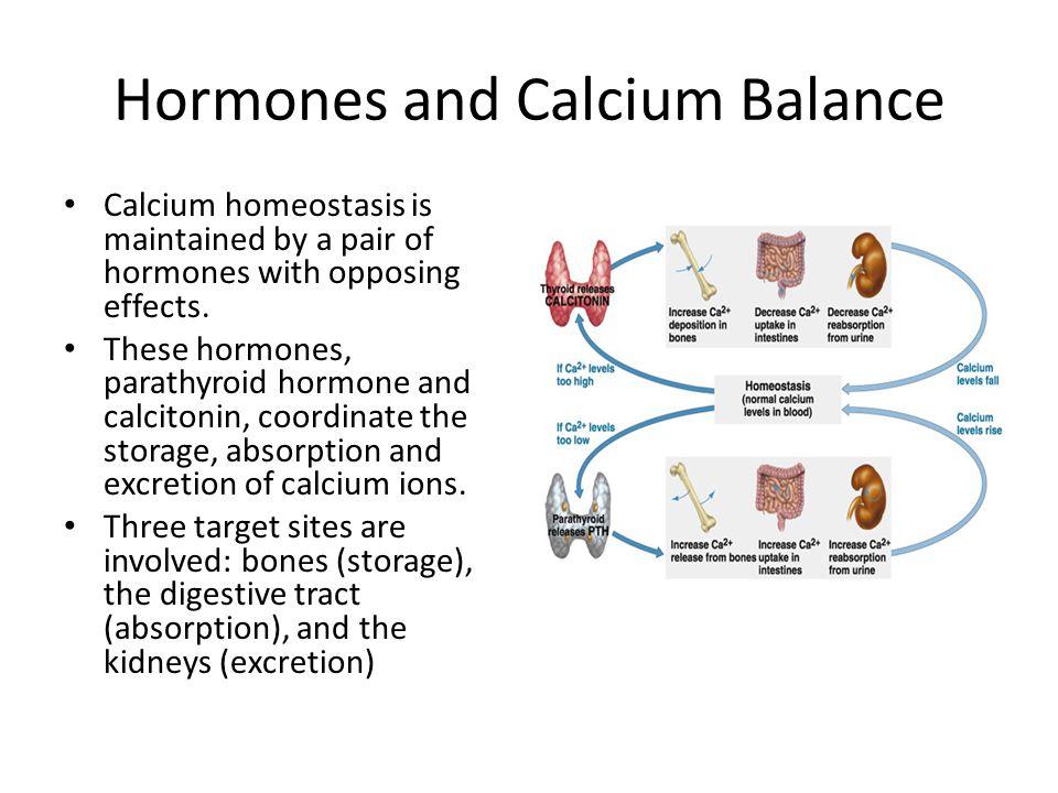 Hormones and Calcium Balance