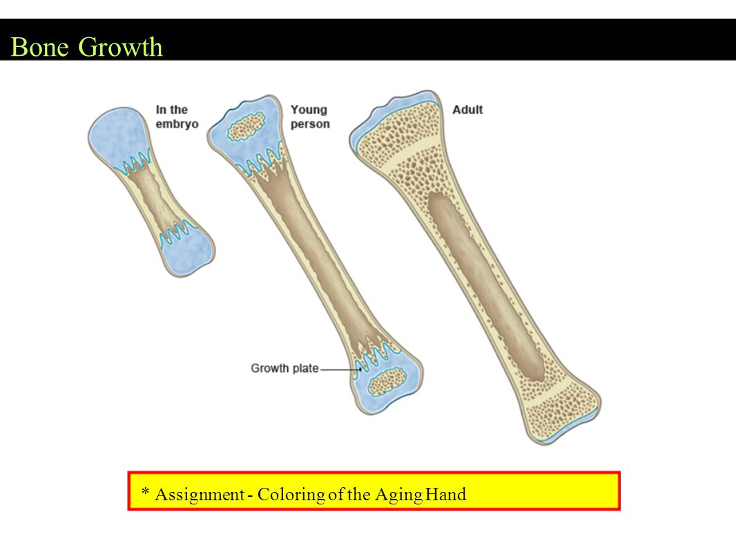 Bone Growth * Assignment - Coloring of the Aging Hand