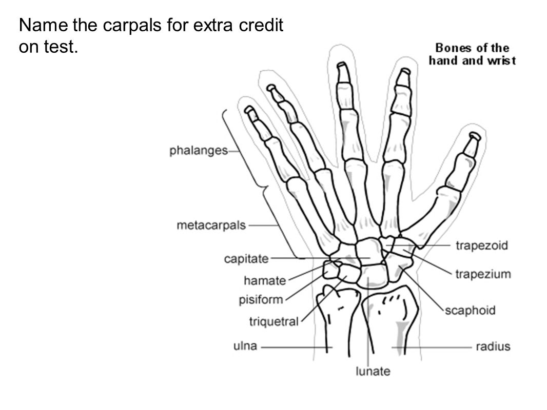 Name the carpals for extra credit on test.