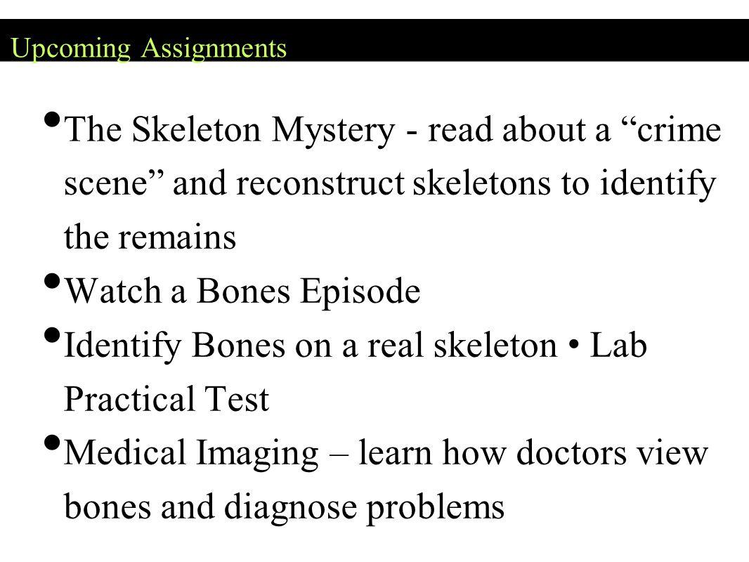 Identify Bones on a real skeleton • Lab Practical Test