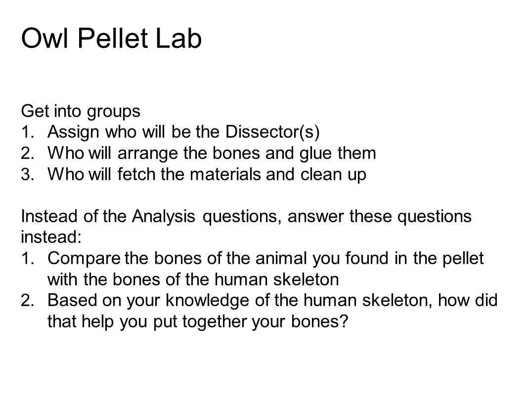 Owl Pellet Lab Get into groups Assign who will be the Dissector(s)