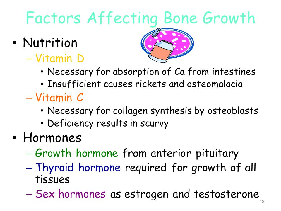 Factors Affecting Bone Growth