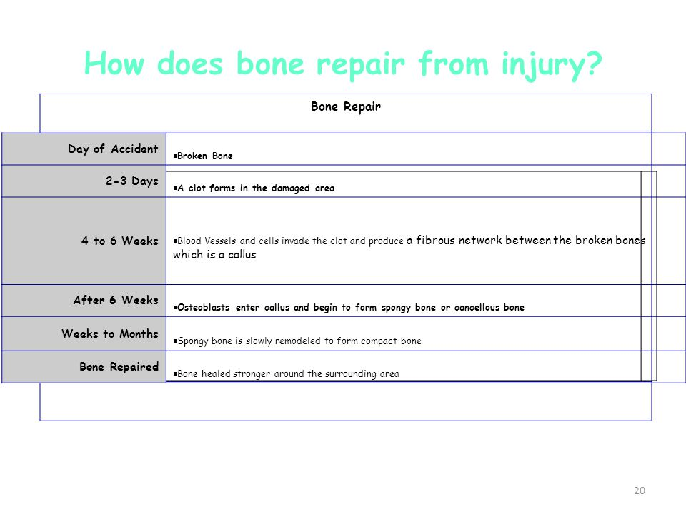 How does bone repair from injury