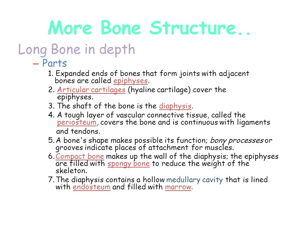 More Bone Structure.. Long Bone in depth Parts