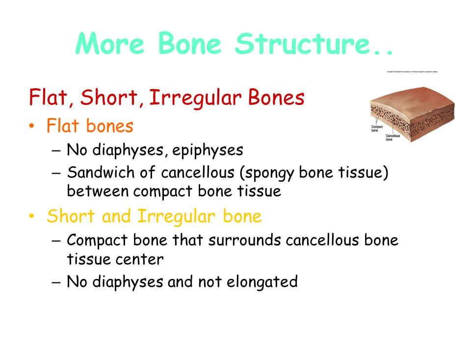 More Bone Structure.. Flat, Short, Irregular Bones Flat bones