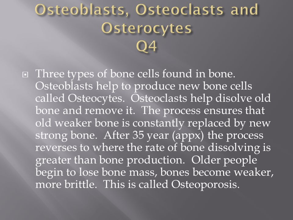 Osteoblasts, Osteoclasts and Osterocytes Q4
