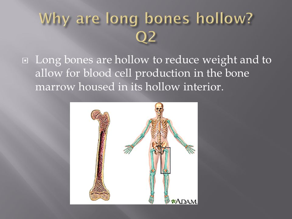 Why are long bones hollow Q2