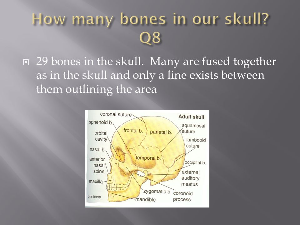 How many bones in our skull Q8