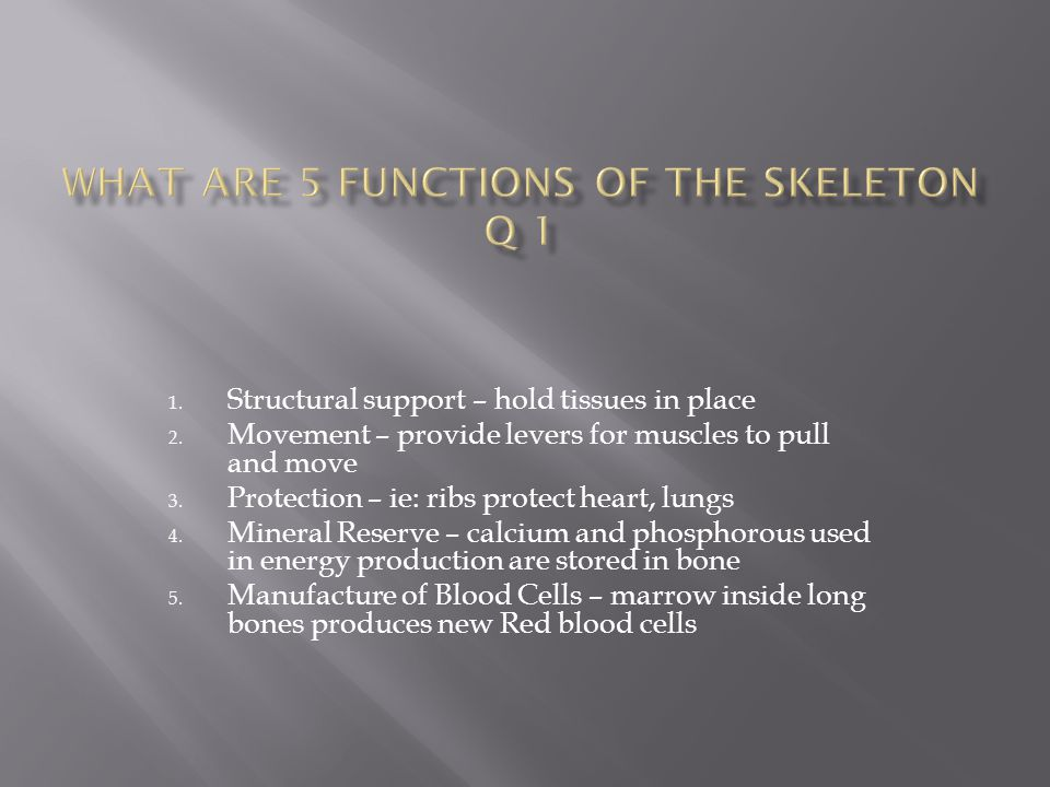 What are 5 functions of the skeleton Q 1