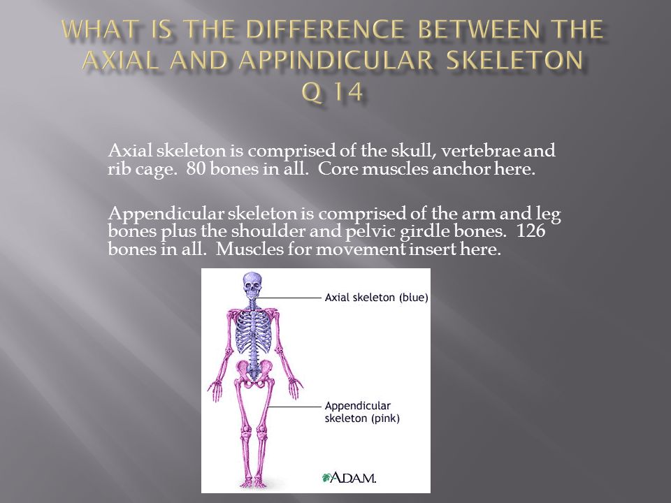 What is the difference between the axial and appindicular skeleton Q 14