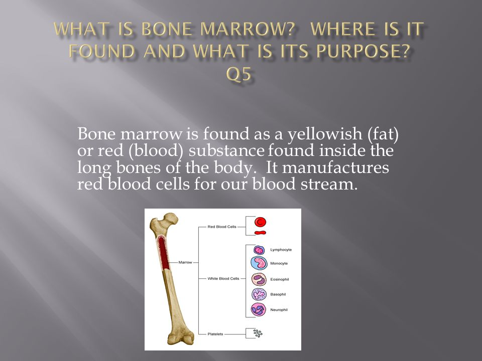 What is bone marrow Where is it found and what is its purpose Q5