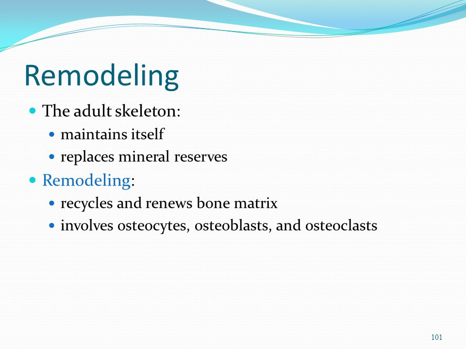 Remodeling The adult skeleton: Remodeling: maintains itself
