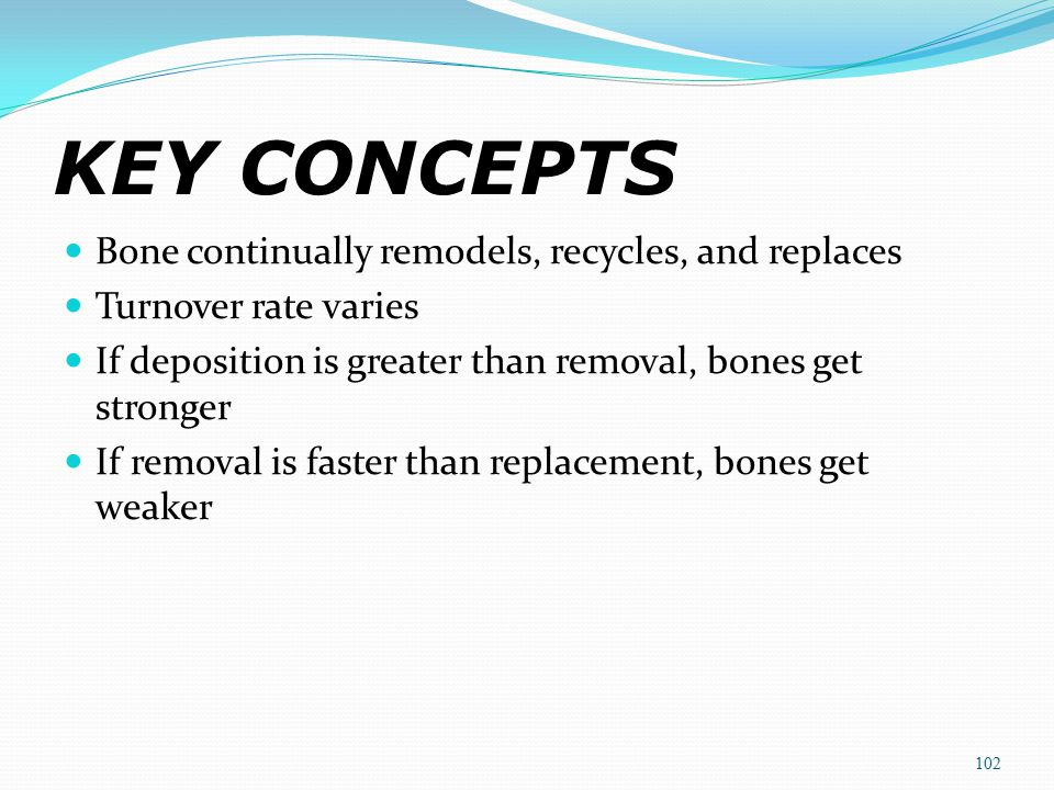 KEY CONCEPTS Bone continually remodels, recycles, and replaces