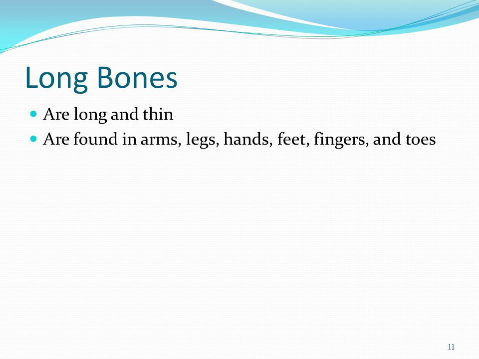 Long Bones Are long and thin