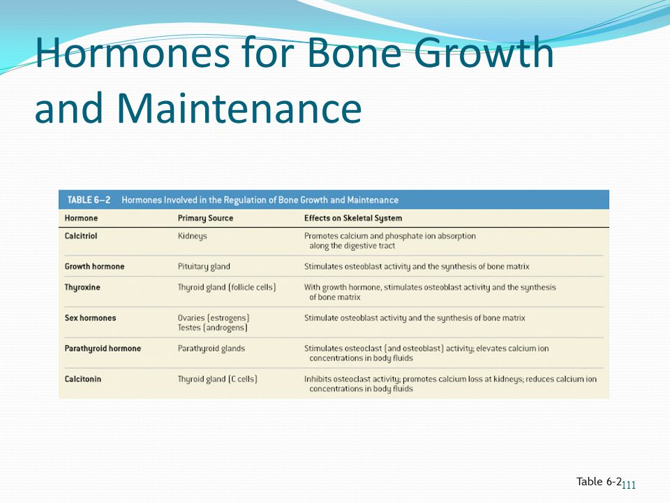 Hormones for Bone Growth and Maintenance