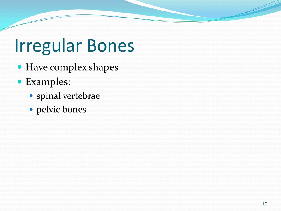 Irregular Bones Have complex shapes Examples: spinal vertebrae