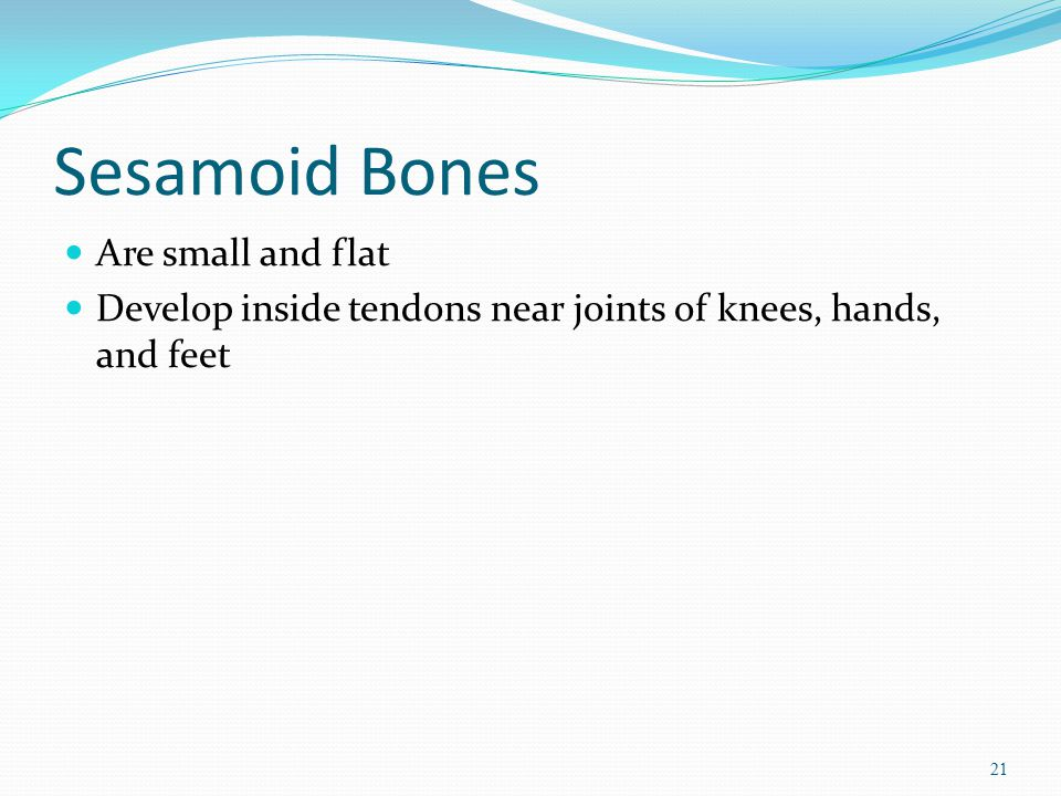 Sesamoid Bones Are small and flat