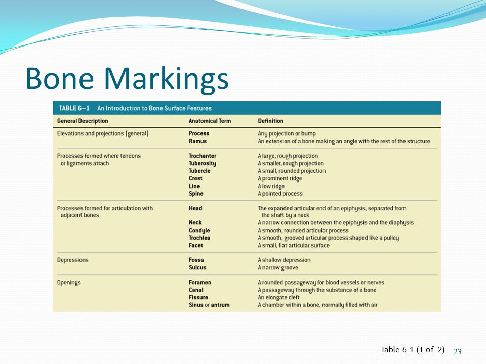 Bone Markings Table 6–1 (1 of 2)