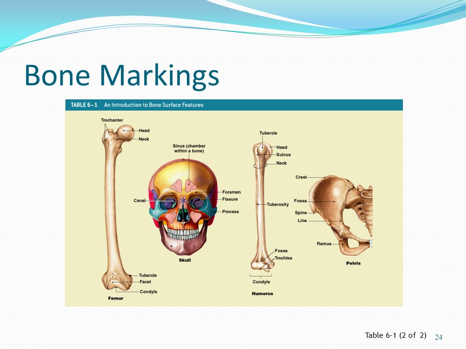 Bone Markings Table 6–1 (2 of 2)