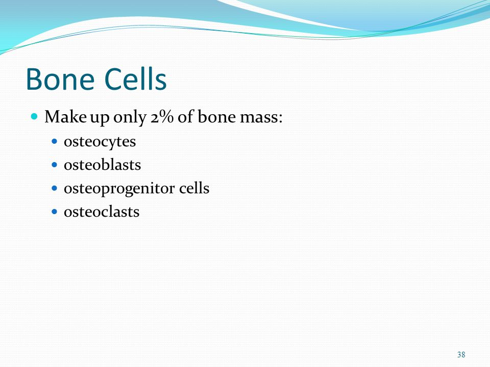Bone Cells Make up only 2% of bone mass: osteocytes osteoblasts