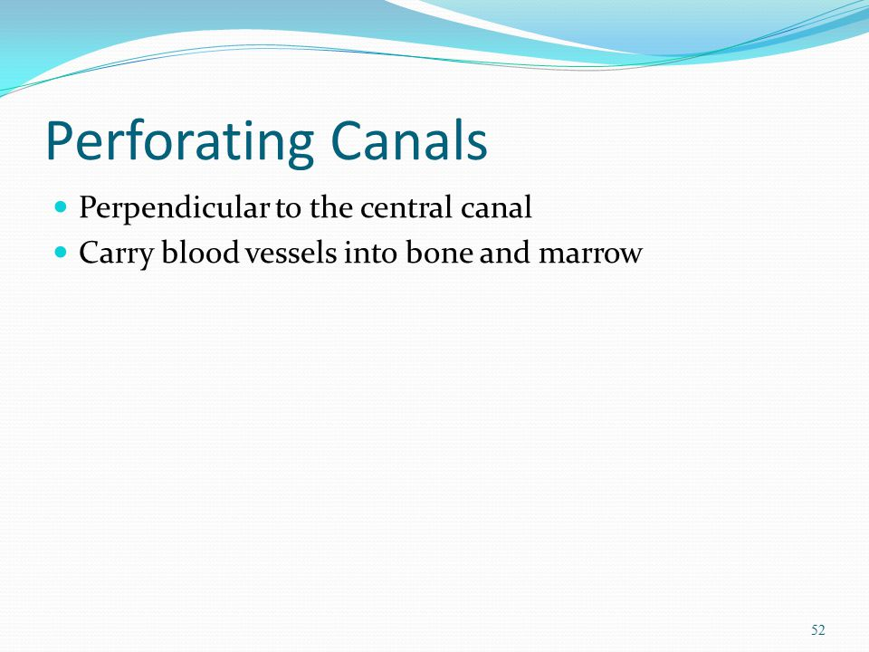 Perforating Canals Perpendicular to the central canal