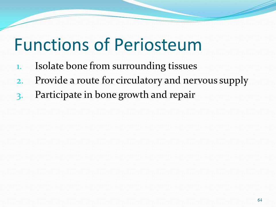 Functions of Periosteum
