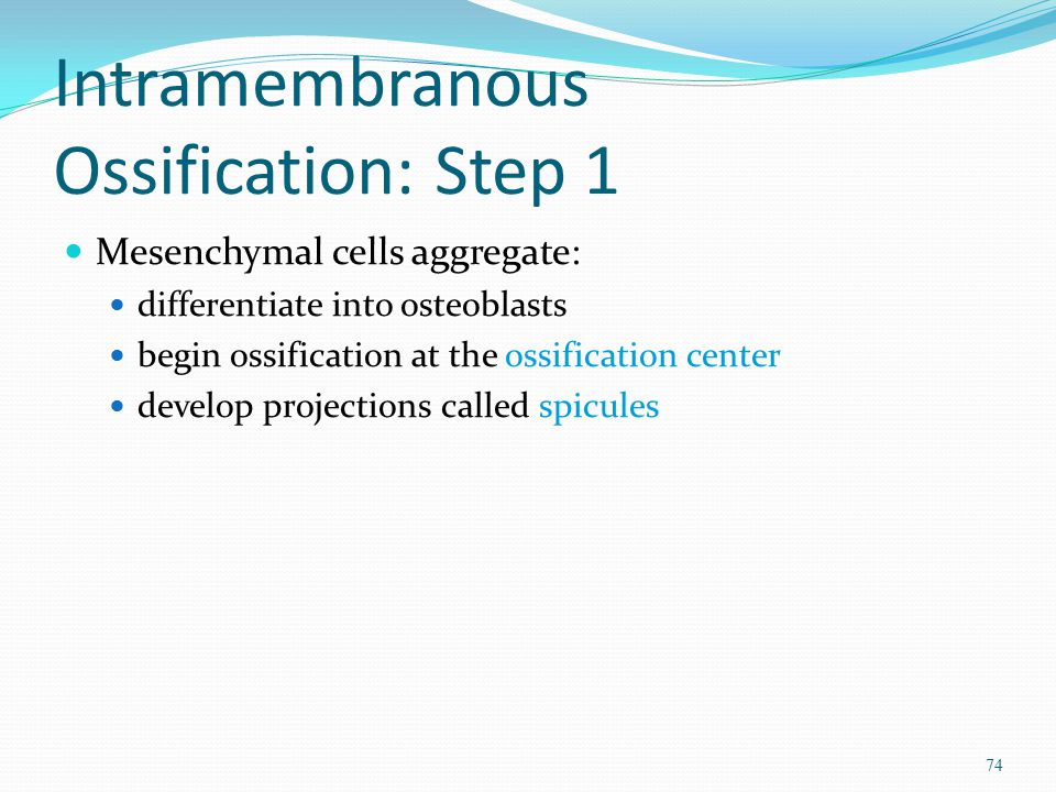 Intramembranous Ossification: Step 1