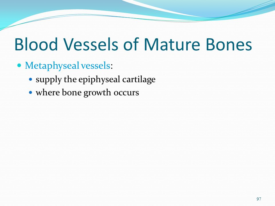 Blood Vessels of Mature Bones