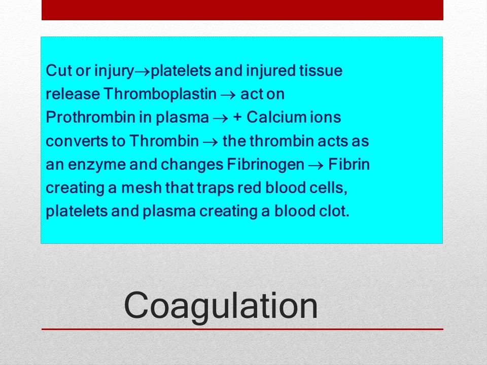 Cut or injuryplatelets and injured tissue release Thromboplastin  act on Prothrombin in plasma  + Calcium ions converts to Thrombin  the thrombin acts as an enzyme and changes Fibrinogen  Fibrin creating a mesh that traps red blood cells, platelets and plasma creating a blood clot.