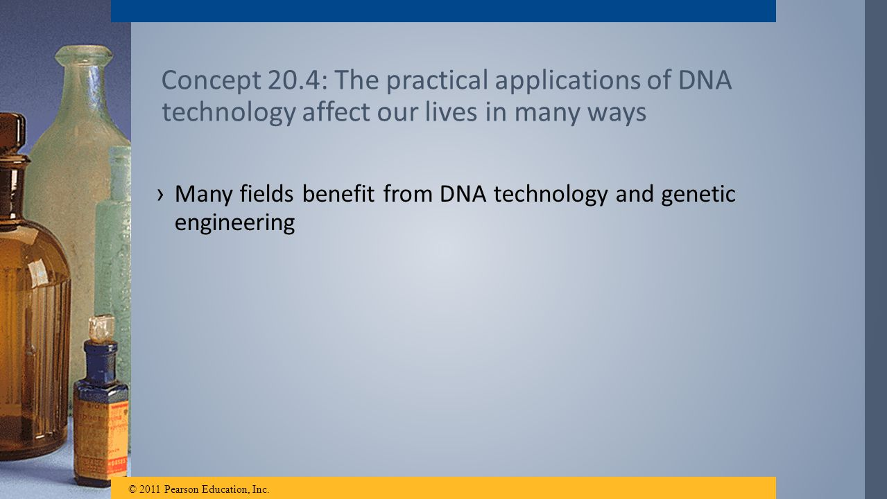 Concept 20.4: The practical applications of DNA technology affect our lives in many ways