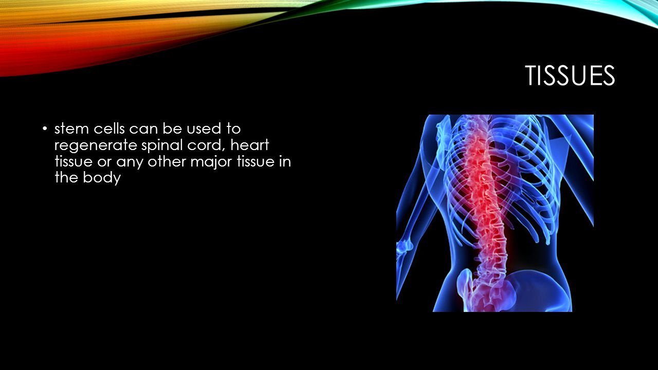 Tissues stem cells can be used to regenerate spinal cord, heart tissue or any other major tissue in the body.