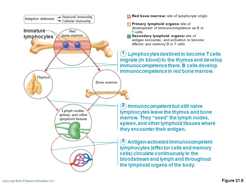 immunocompetence as a constraint on the secretion of steroid hormones and associated behaviour