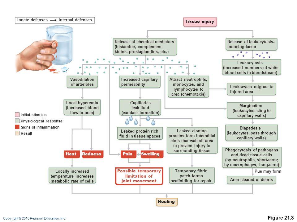 Figure 21.3 Innate defenses Internal defenses Tissue injury