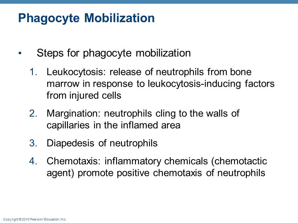 Phagocyte Mobilization