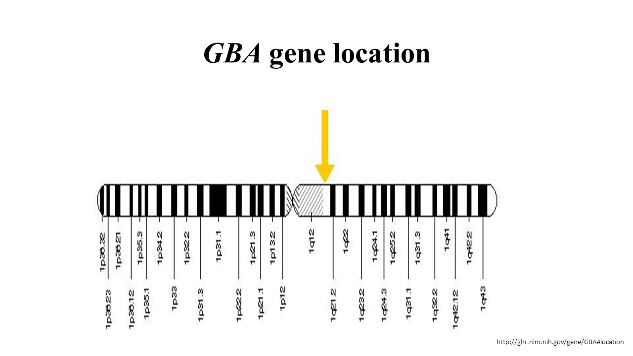 GBA gene location http://ghr.nlm.nih.gov/gene/GBA#location