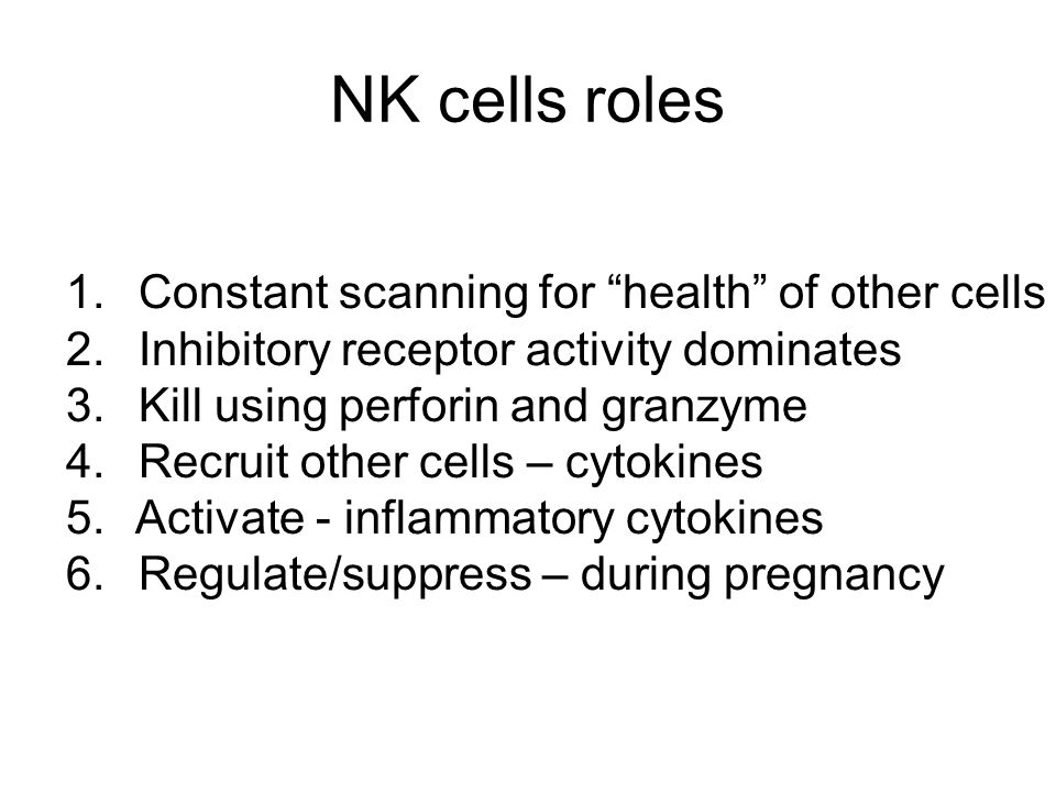 NK cells roles Constant scanning for health of other cells