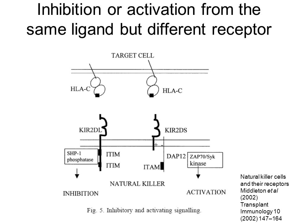 Inhibition or activation from the same ligand but different receptor