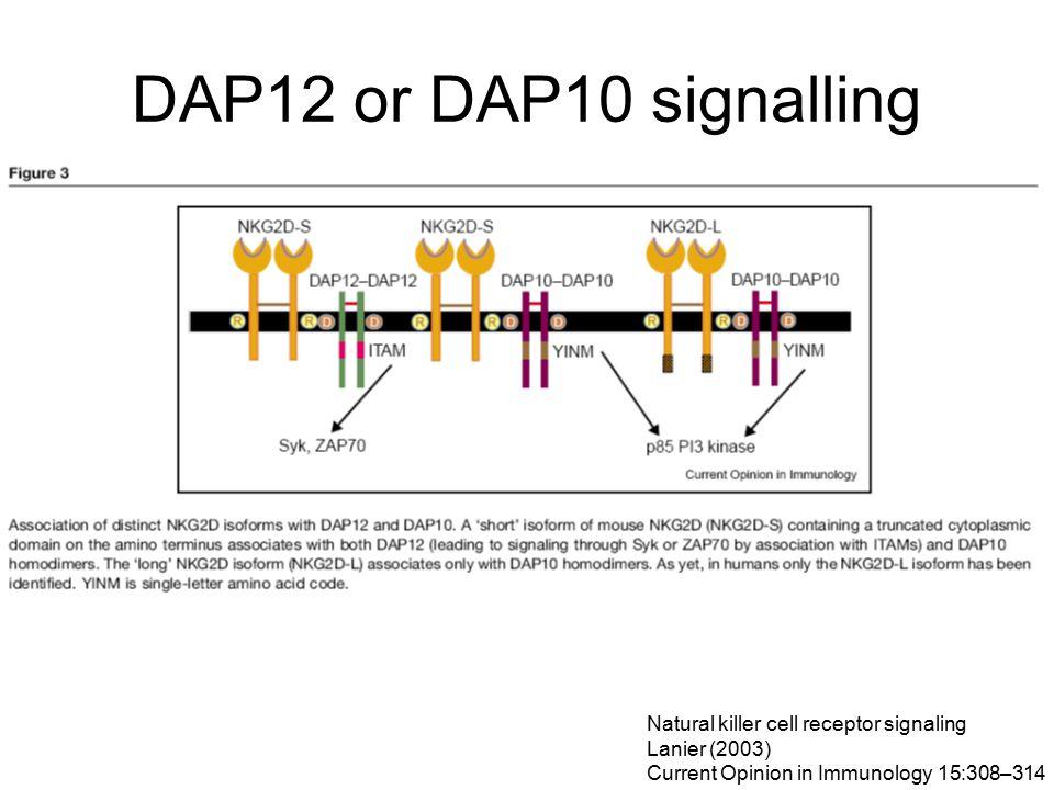 DAP12 or DAP10 signalling Natural killer cell receptor signaling