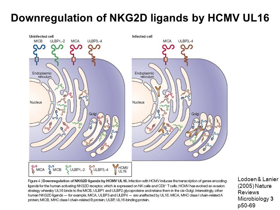 Downregulation of NKG2D ligands by HCMV UL16