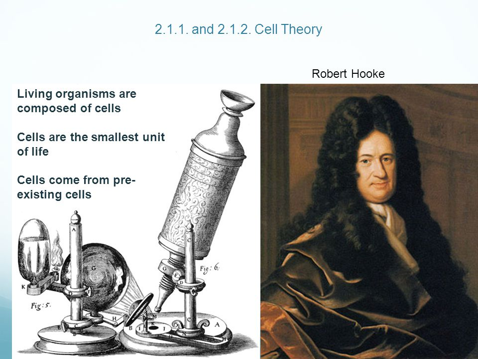2.1.1. and 2.1.2. Cell Theory Robert Hooke