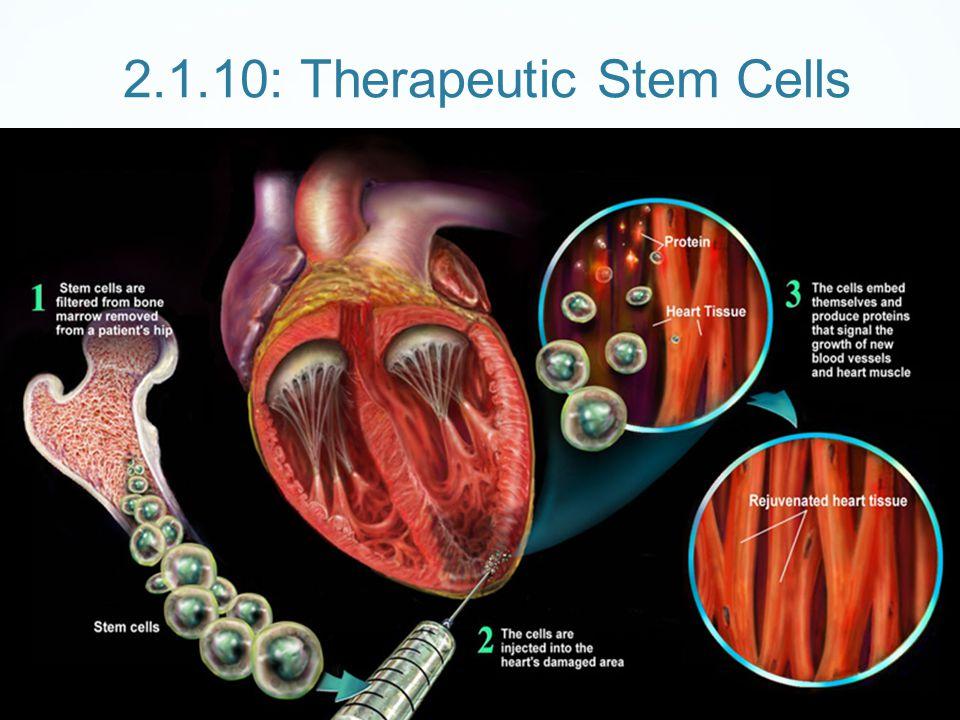 2.1.10: Therapeutic Stem Cells