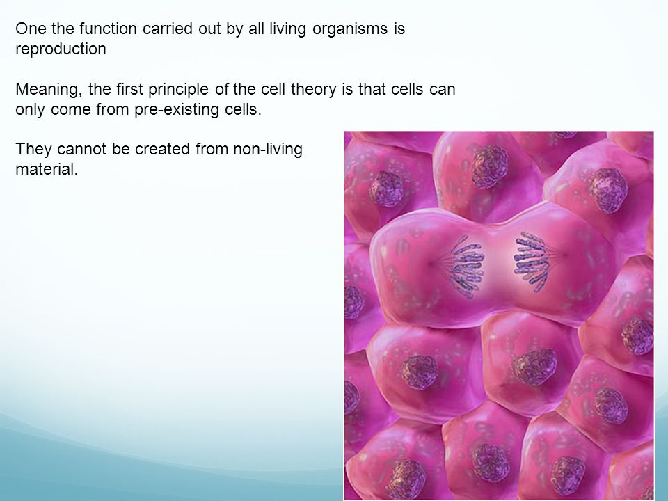 One the function carried out by all living organisms is reproduction