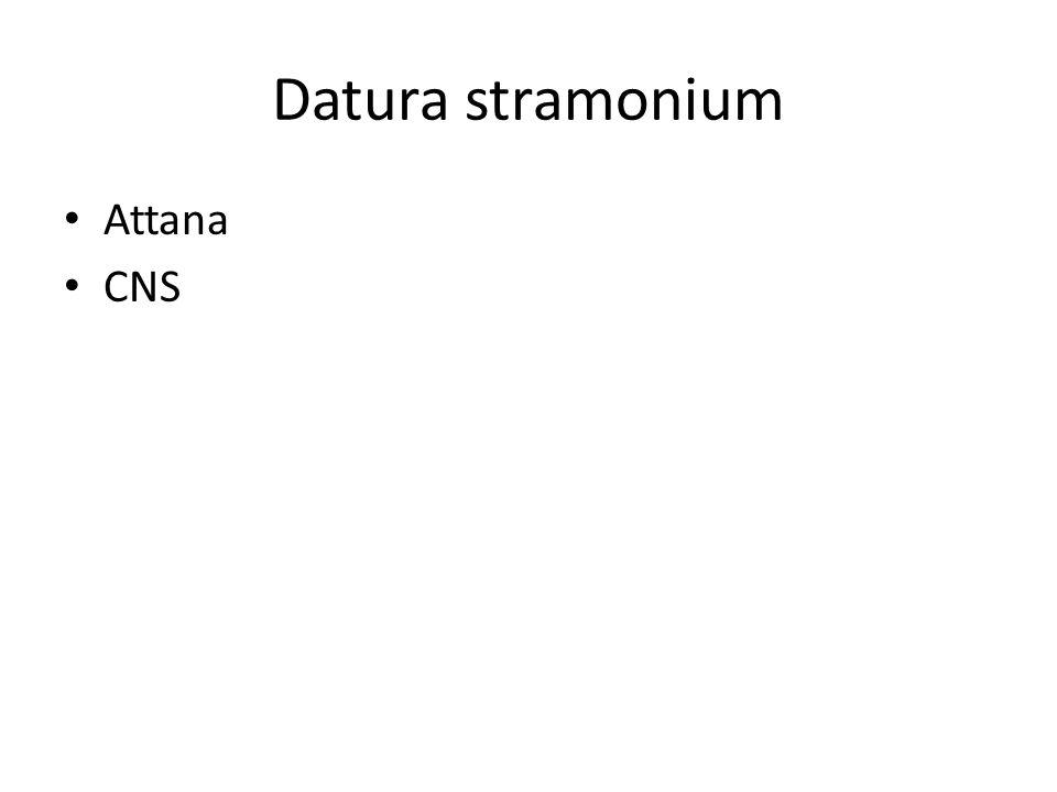 Datura stramonium Attana CNS