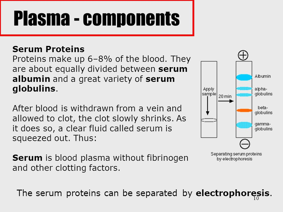 The serum proteins can be separated by electrophoresis.
