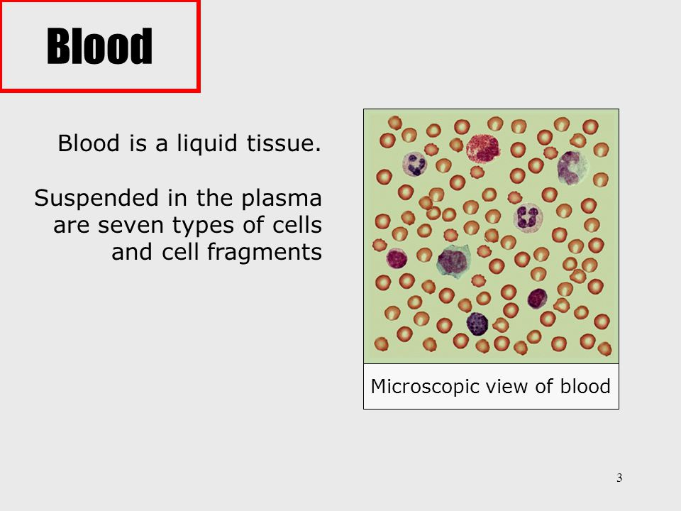 Microscopic view of blood